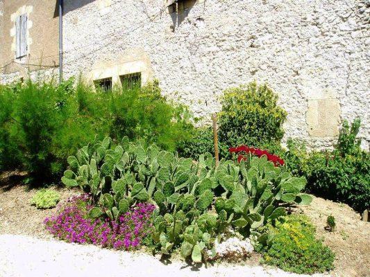 11 - Une partie du jardin